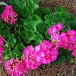 Diane Burke's gardenslider1